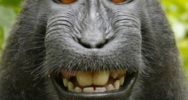 Monkey selfie: Analysing the Copyright Ownership of Work by an Animal