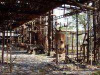 Bhopal gas tragedy case study