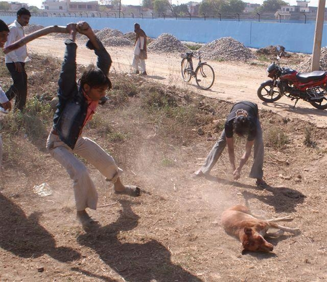 animal abuse an inhumane treatment against innocent ones ipleaders 1 prevent cruelty towards animals