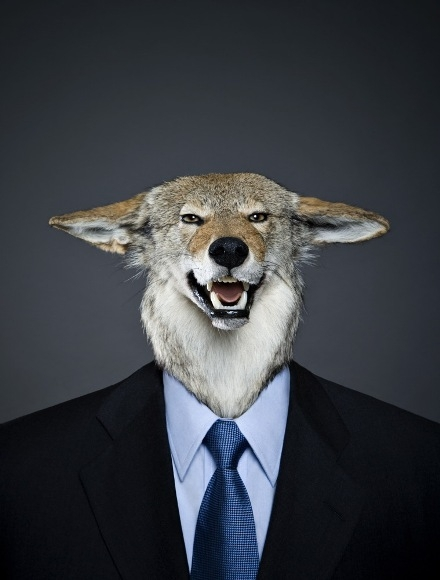What can lawyers learn from the wolves?