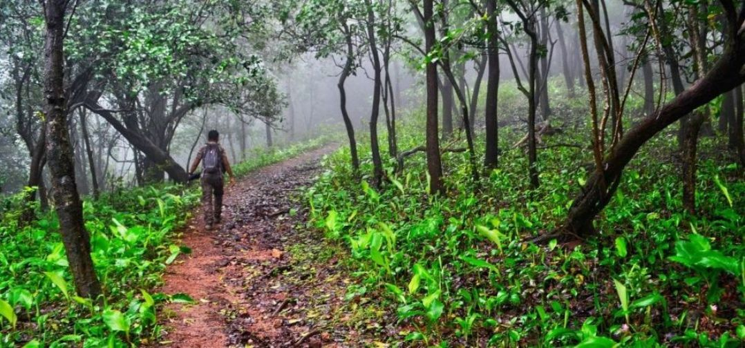 Forest Law in India - Policy and Assessment - iPleaders