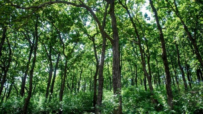 Reserved Forests