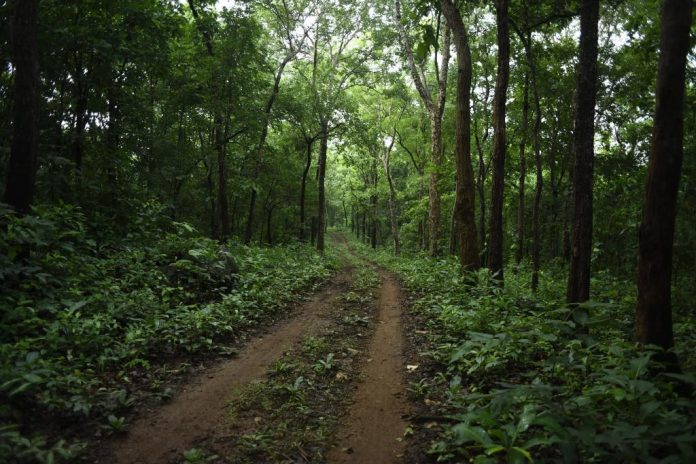 Indian Forest Act,